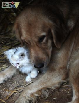 刚出生的小猫和小狗_刚出生的小猫和小狗高清图片