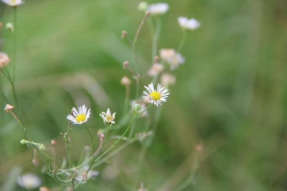 临沭一中的校花和校草