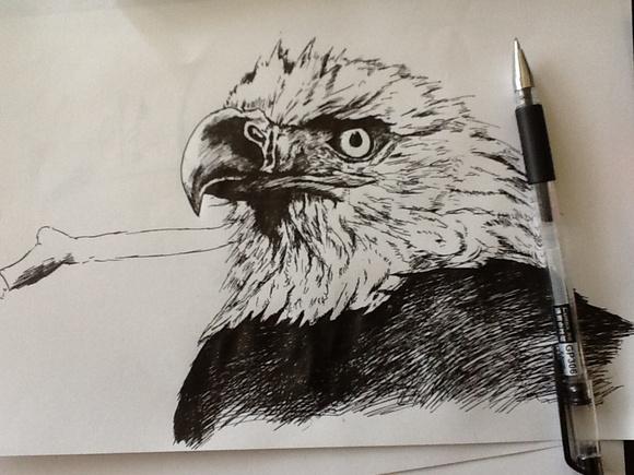 直播.钢笔绘鹰本初一求指点