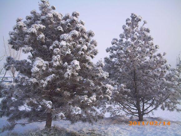 雪景_唐山盛华世家吧_百度贴吧图片