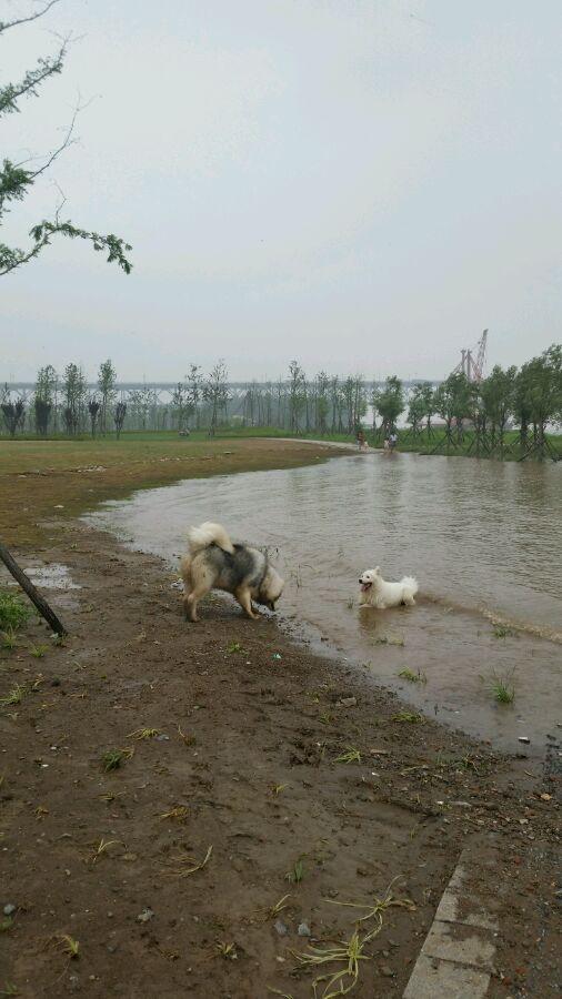 萨摩爱玩水 我儿子只肯在水边泥堆里玩!