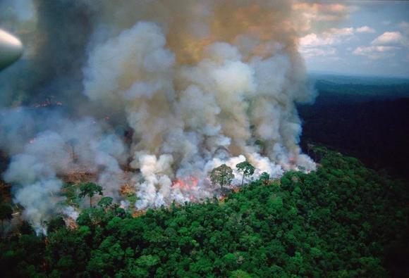 亚马逊雨林大火连烧3周,媒体噤声,生灵涂炭【安吉吧】