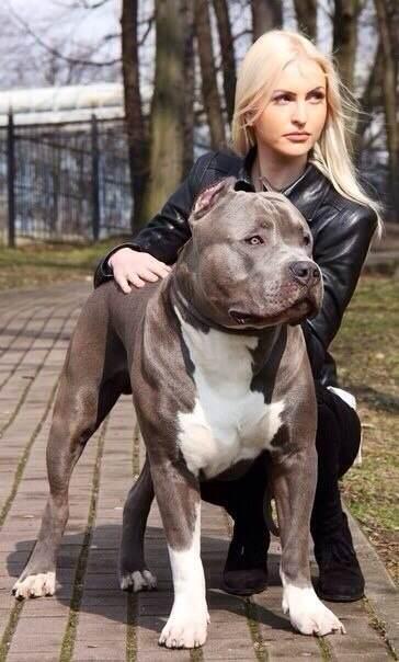 乾县有没有爱猛犬的美女?