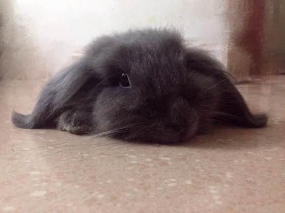公兔绝育原地转