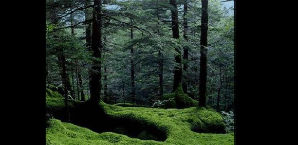 以红松为主的针阔叶混交林,是东北地区最有代表性的森林类型.图片