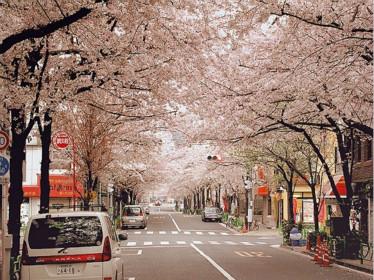 日本留学:中国学子在日本
