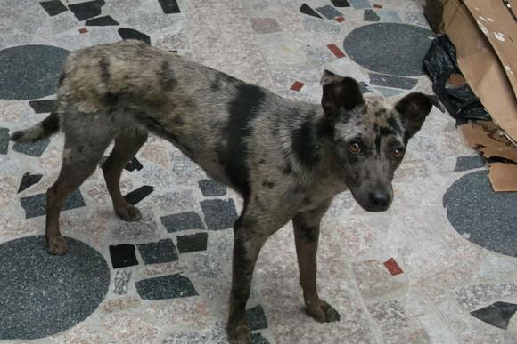 非洲土_我家的狗 不知道啥狗串的。