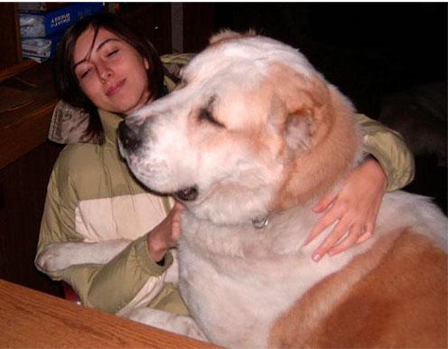 美女爱高爱中亚 猛犬和美丽的姑娘