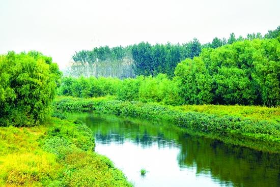 让森林走进城市 让城市拥抱森林图片