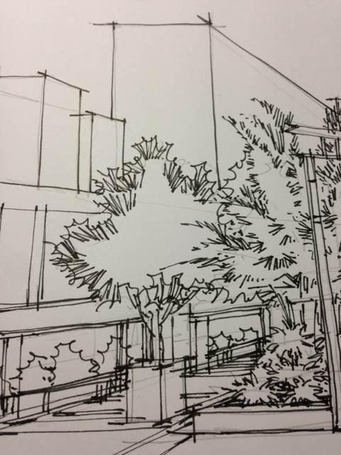 【直播】钢笔画植物建筑结合(主植物)图片