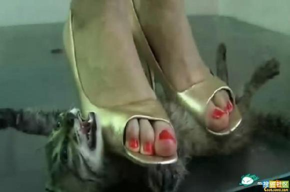 踩兔女漂亮女子残忍踩踏小动物