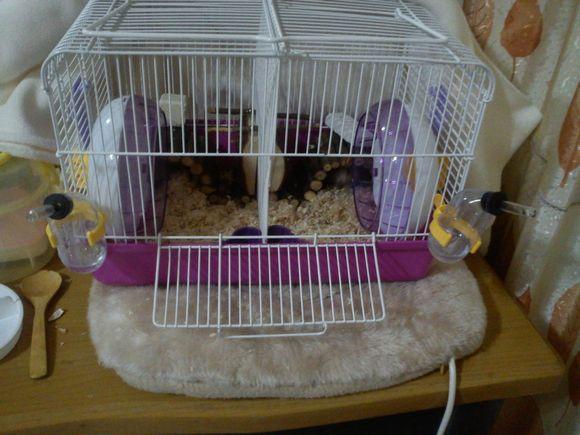 关于湿尾,关于冬季保暖 仓鼠吧