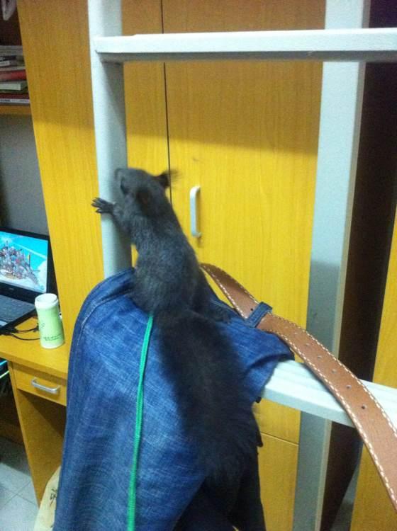 收假回来宿舍惊现一只黑色大佬鼠!图片