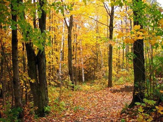 秋天不仅是一个美丽的季节图片