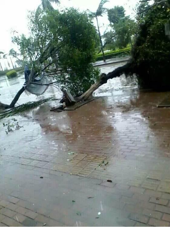 又刮台风了现在外面正是狂风雨!