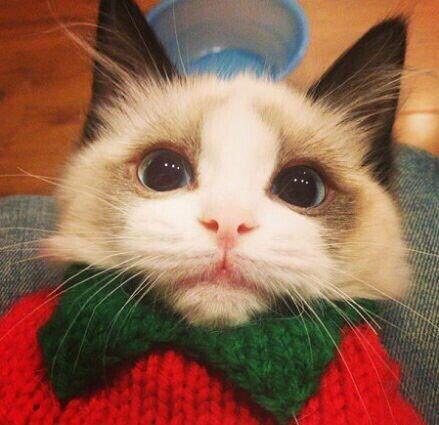 发些萌猫头像吧图片