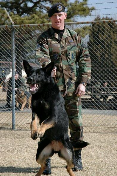 Dogs In The Military Video