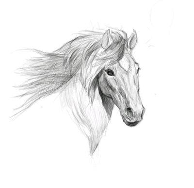 手绘 素描 线稿图片