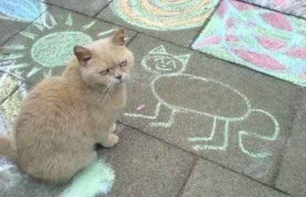 喜欢猫猫的发发照片咯 济南大学吧 百度贴吧 高清图片
