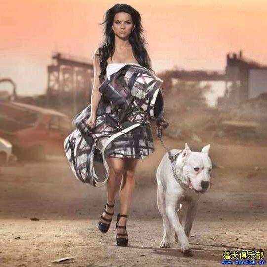 美女与猛犬 更爱哪一个