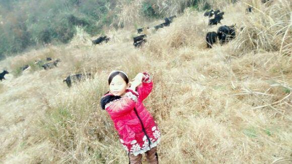 小美女看羊!