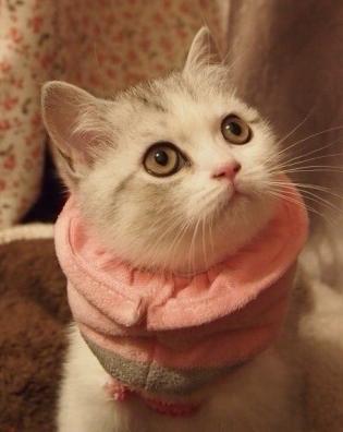 张小美女的照片!