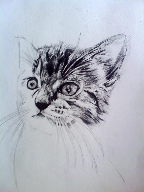 【萌图】美术课素描小猫一只图片