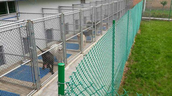 西安宠宸寄养乐园!爱犬的乐园 是您放心的托付!