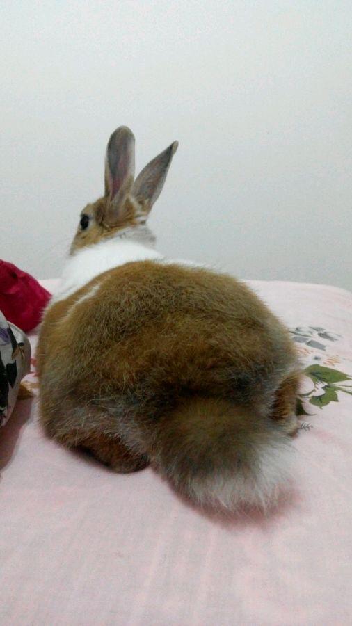 可不给我看看你们兔兔的蜗牛!_视频吧_百度贴吧屁股v蜗牛的兔子图片