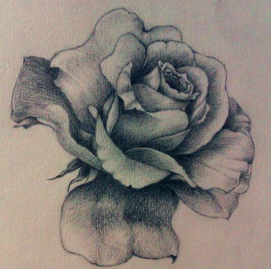 一支玫瑰花素描_玫瑰 花 素描 素描 一朵 玫瑰 花 ...