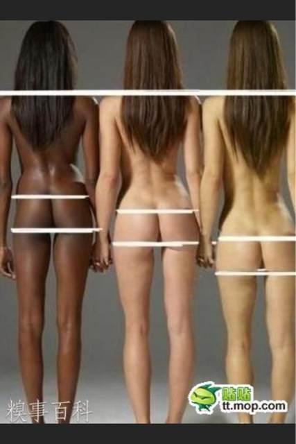 黑人 白人 黄种人 女性身材比例图