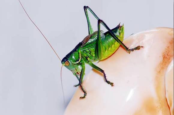 虫子钻入美女肚