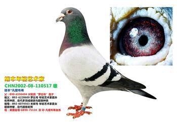 中华信鸽拍卖平台