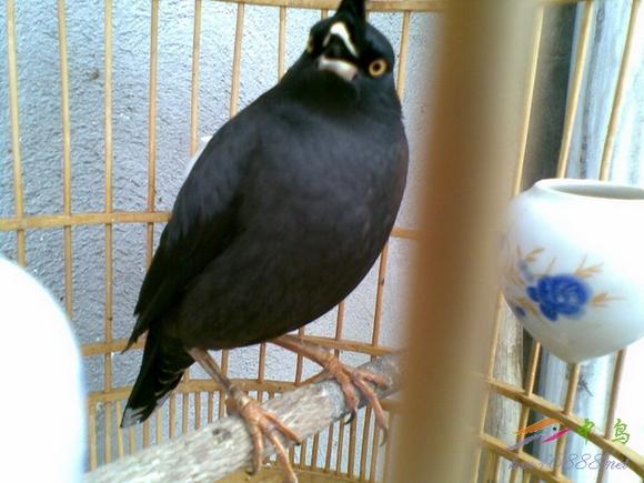 啄木鸟经典大片大全