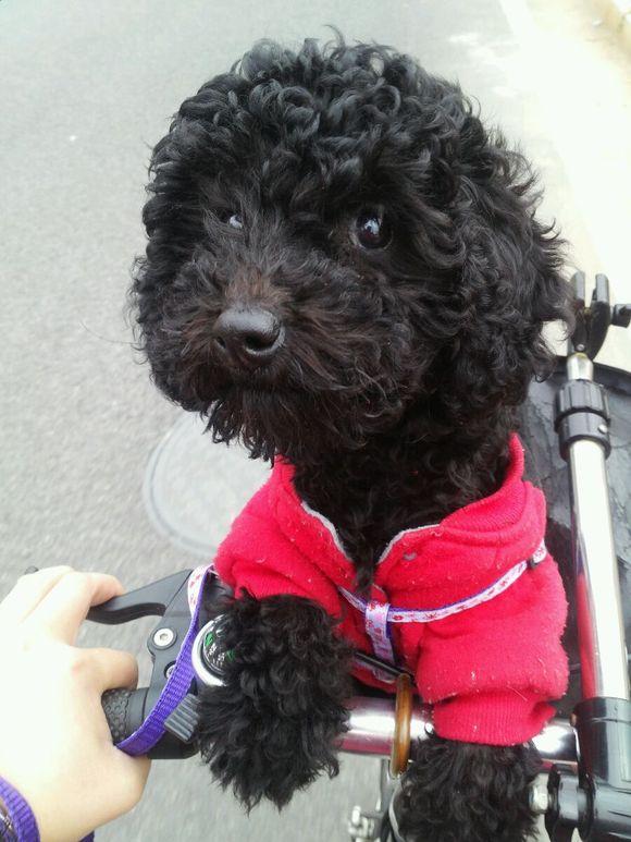 狗狗拉黑色便便正常吗