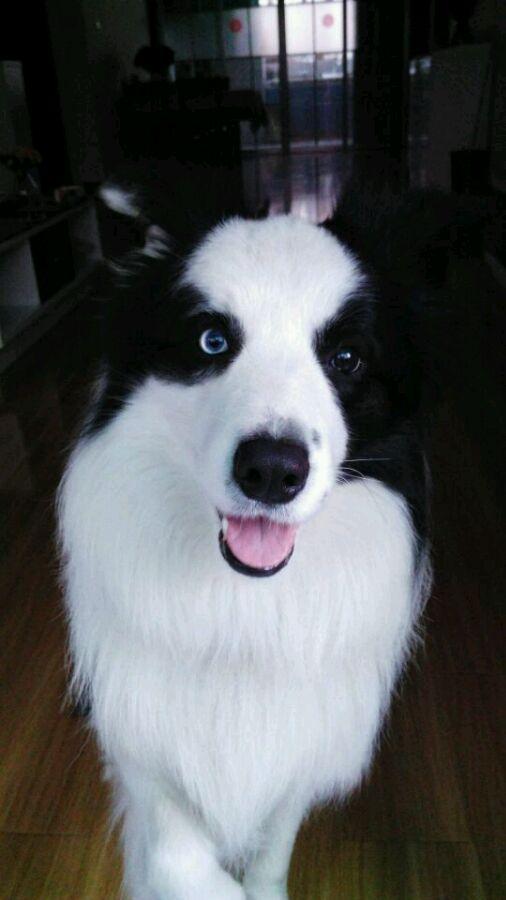狗狗眼睛有虫子怎么办
