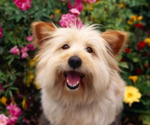怎么促进狗狗排便