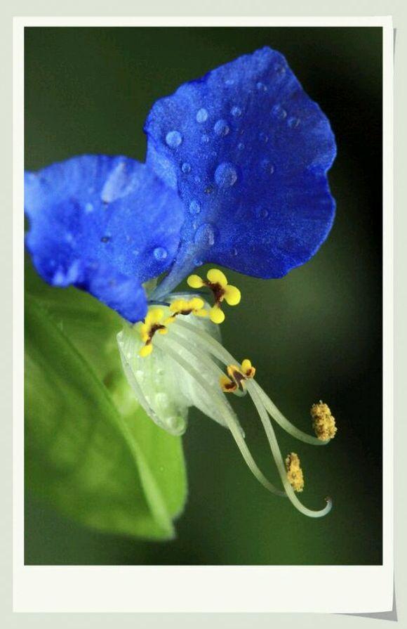 日本蓝色蝴蝶微博