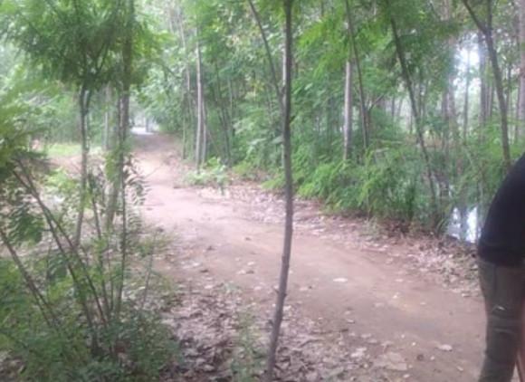 阳谷小树林视频女主角
