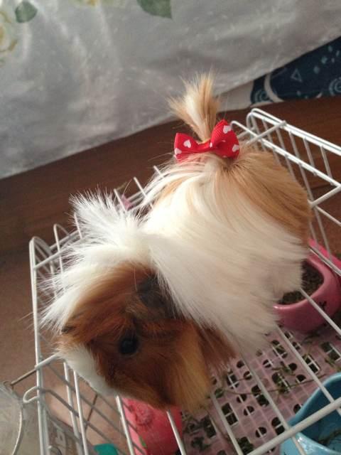 狗狗为什么叫蝴蝶结