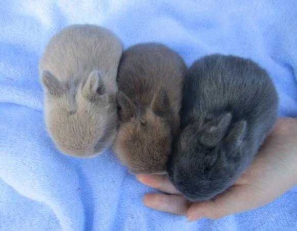 肉兔和宠物兔区别图片