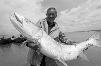 人的原始是鱼吗