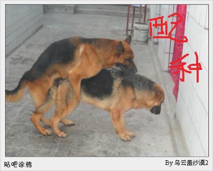 老婆跟狗狗爱爱