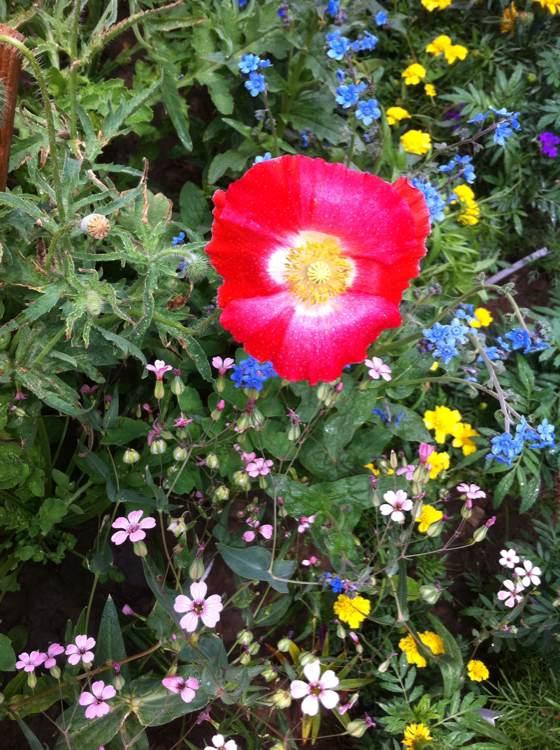 冬天开花的植物图片
