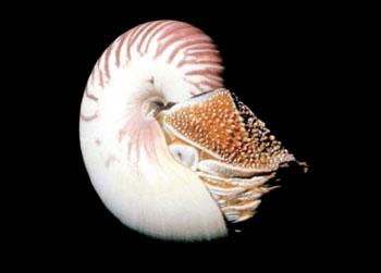百达翡丽鹦鹉螺