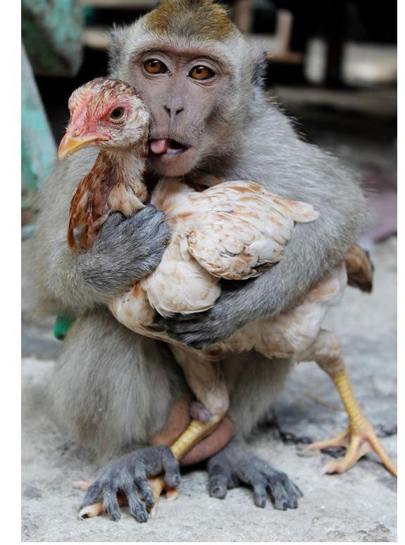 动物界什么动物最有钱