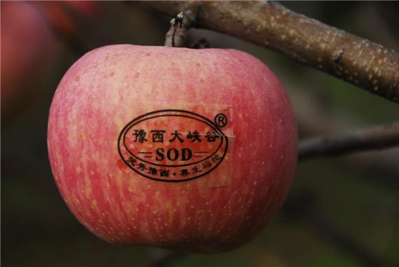 苹果上有sod什么意思