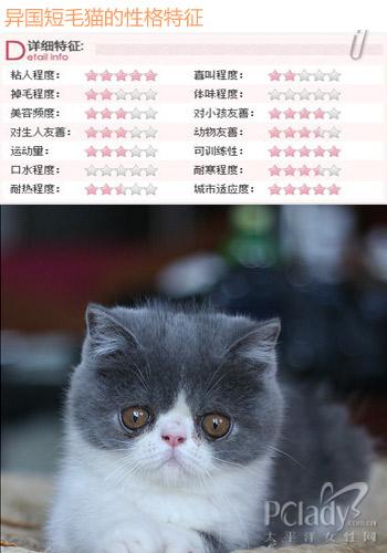 异国短毛猫价格