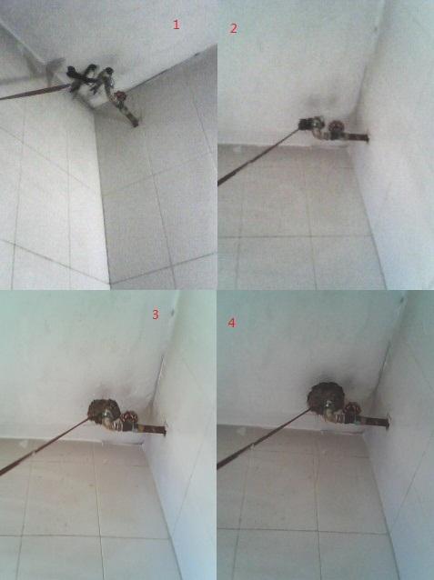 上海厕所鸟洞