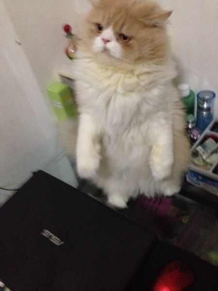 掐猫脖子窒息尿了